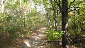 Turkey Mountain Urban Wilderness Area_Pic